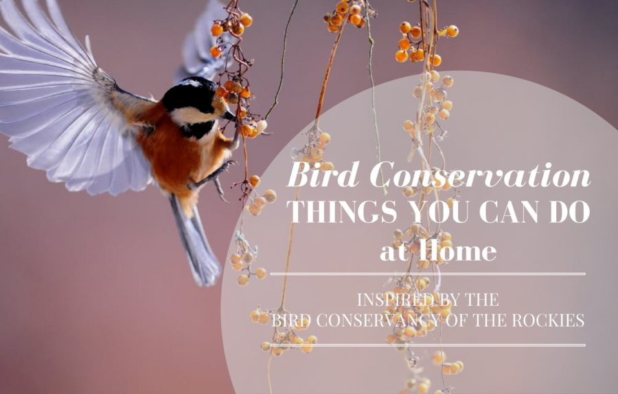 bird conservancy of the rockies, bird conservation, environmental nonprofits, real estate agency, denver real estate agency, denver agency, conscious real estate