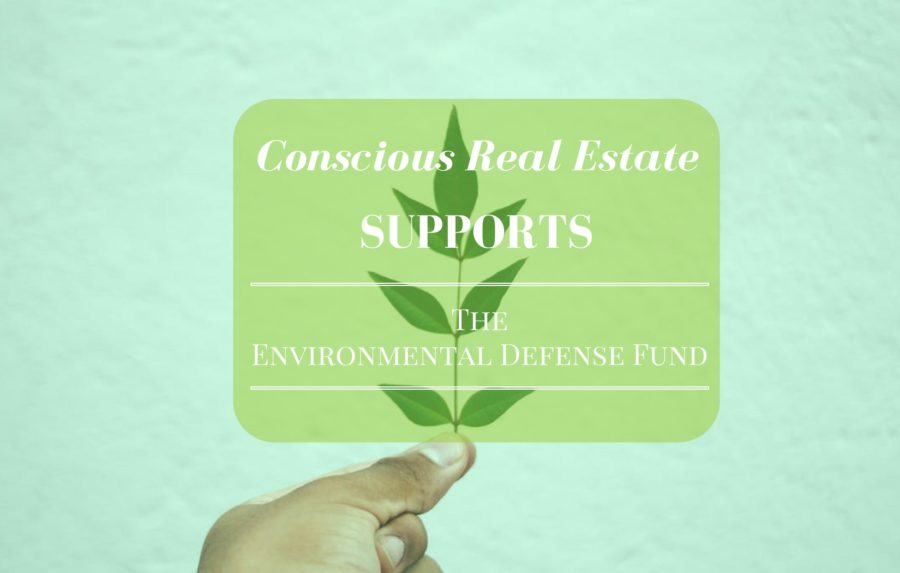 nonprofits for the environment, conscious real estate, denver real estate market, denver real estate agent, kimberly mcaleenan