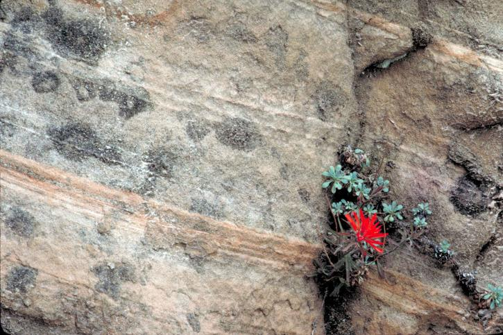 flower, rock and a hard place, colorado youth leaders, colorado youth, youth, nonprofit, conscious real estate